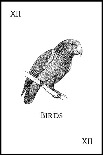 12Birds
